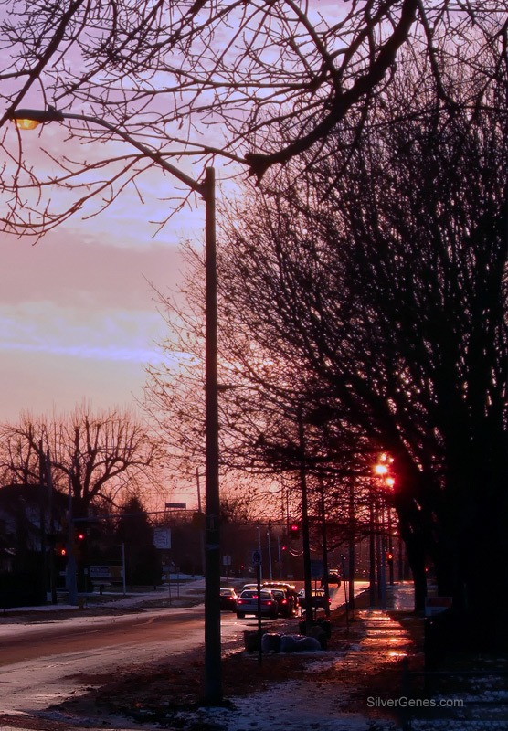Late Winter Afternoon - Brockville ON