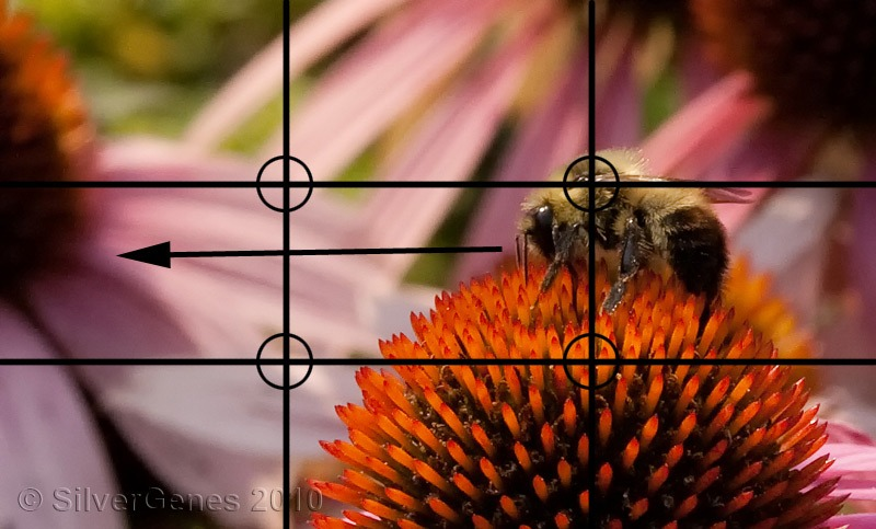 Photo Composition - Bee on Flower Rule of Thirds