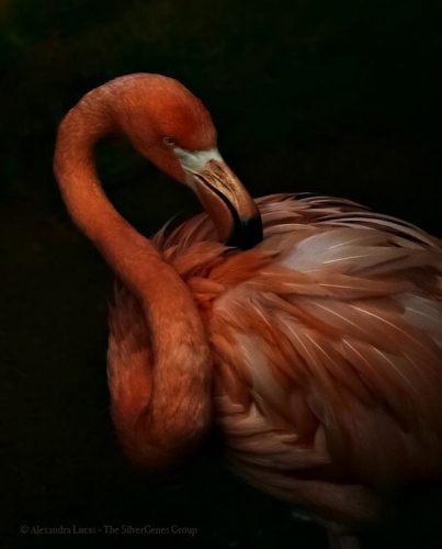 Flamingo in the Dark